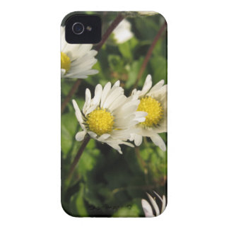White daisy flowers on green background iPhone 4 covers