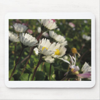 White daisy flowers on green background mouse pad