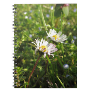 White daisy flowers on green background notebooks