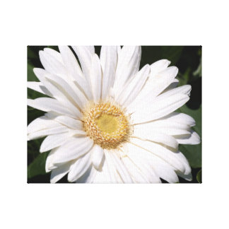 white daisy gallery wrap canvas