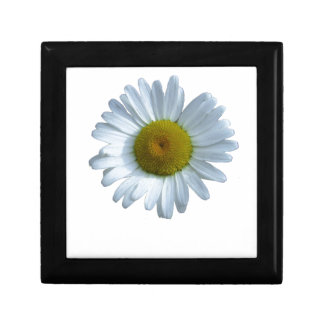 White Daisy Gift Box