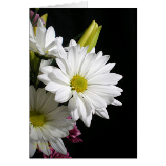 White Daisy Lily Greeting Cards