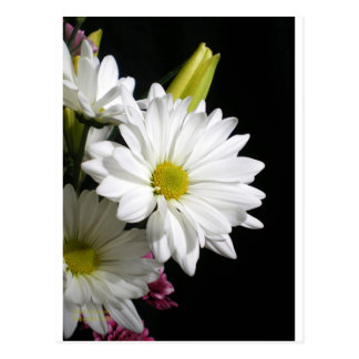 White Daisy Lily Postcard