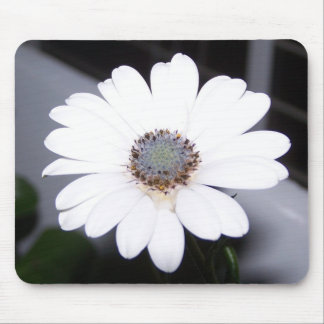 white daisy mouse pad