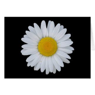 White Daisy Notecard Greeting Card
