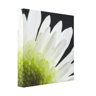 White Daisy on Black Wrapped Canvas Print