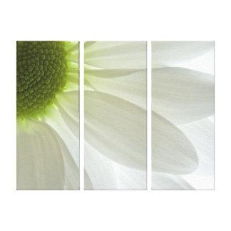 White Daisy Petals Canvas Print
