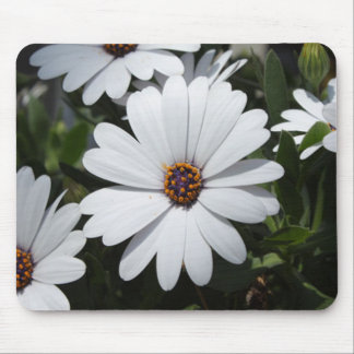 White Daisy s in Bloom Mousepads