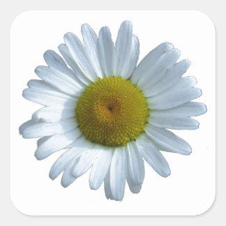 White Daisy Square Sticker