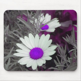 White Daisy (w Purple) mousepad