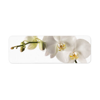 White Dendrobium Orchid Flower Spray Floral Blank Return Address Label