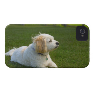 White dog iPhone 4 cover