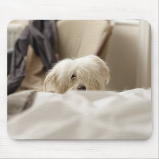 White dog hiding behind bed (differential focus) mouse pad