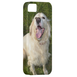 White Dog iPhone 5 Cases