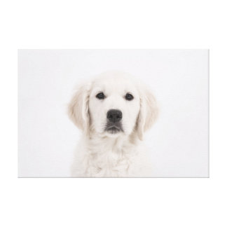 White Dog on Canvas Puppy Great Pyrenees