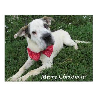 White Dog Postcard