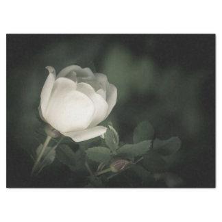 White Dogrose on a Dark Background. Tissue Paper