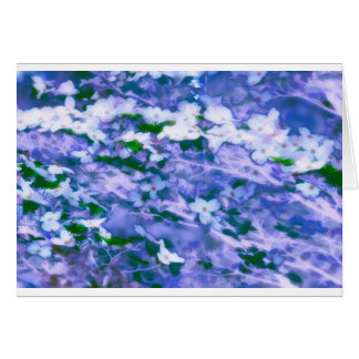White Dogwood Blossom in Blue Card
