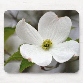 White Dogwood Flower Mouse Pad