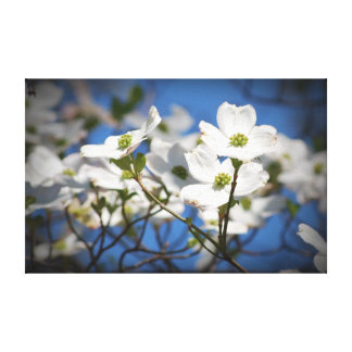 White Dogwood Flowers Canvas Prints