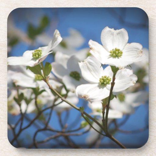 White Dogwood Flowers Drink Coaster