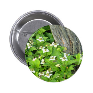 white Dogwood flowers Quebec Canada flowers Pinback Button