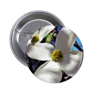 White Dogwood Tree Flowers in shadow Pinback Button