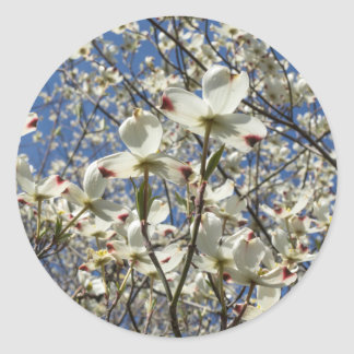 White Dogwood Tree Flowers Stickers