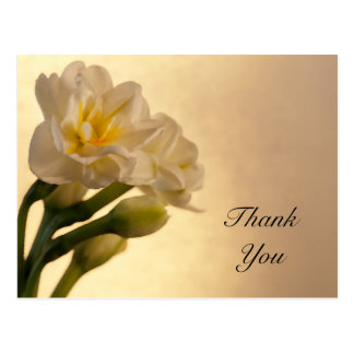 White Double Daffodils Thank You Postcard