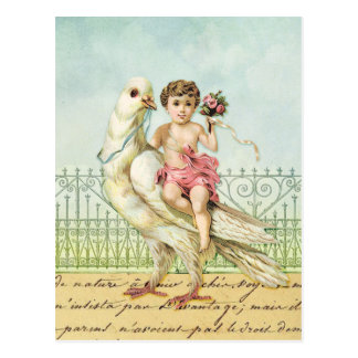 White Dove and Cherub Postcard