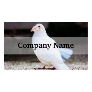 White Dove, Bird Photograph Business Card Templates