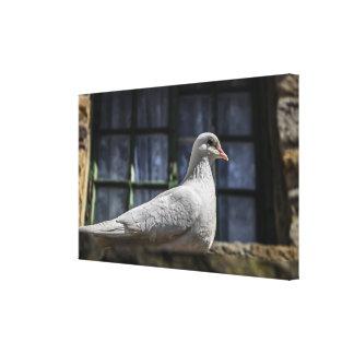 White Dove Gallery Wrap Canvas