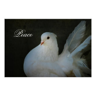 White dove peace symbol poster