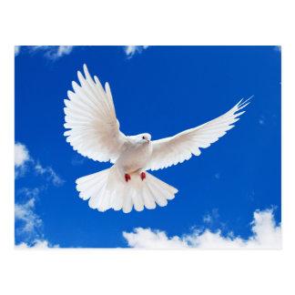 White Dove Postcard