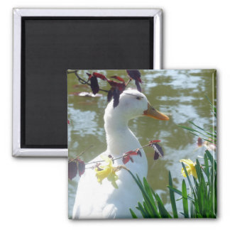 White Duck In Daffodils Magnet