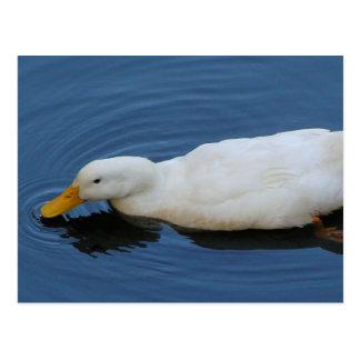 White Duck Postcards