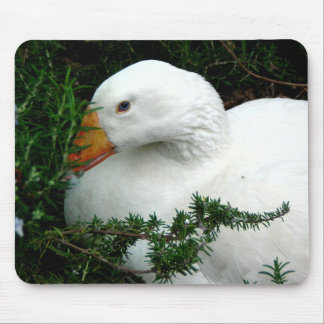 WHITE DUCK RESTING MOUSE PAD