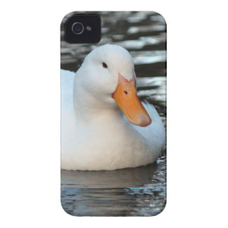 White Duck swimming in a creek iPhone 4 Case
