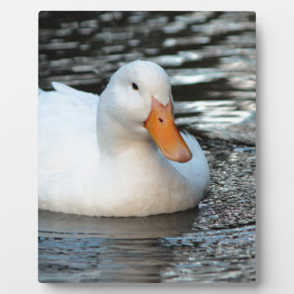 White Duck swimming in a creek Plaque