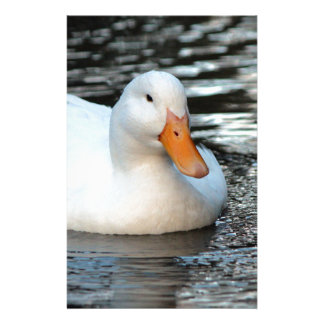 White Duck swimming in a creek Stationery
