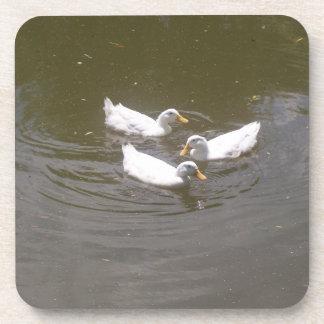 White Ducks Swimming Cork Coasters