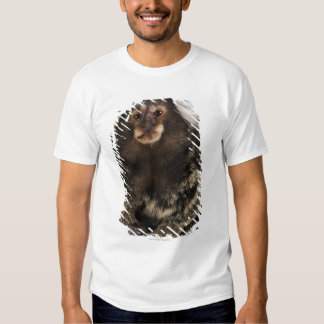 White eared Marmoset on branch, close up, studio Shirts