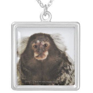White eared Marmoset on branch, close up, studio Silver Plated Necklace