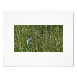 White Egret in Tall Grass Photo Print