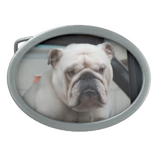 White English Bulldog Dog Belt Buckle