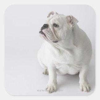 White English Bulldog Stickers
