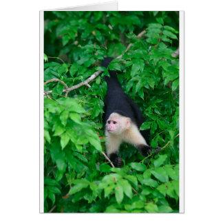 White faced capuchin monkey card