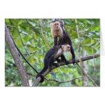 White-Faced Monkey Family Photo Cards