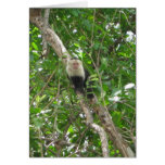 White Faced Monkey Notecard Greeting Card