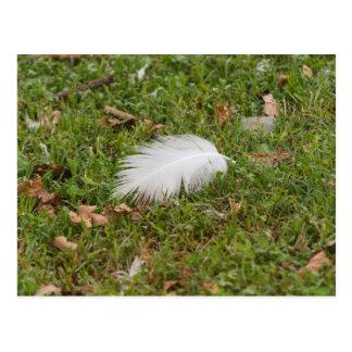 white feather on meadow postcard